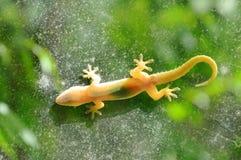 O lagarto que pendura ainda para toma sol na porta de vidro com fundo do jardim Imagens de Stock Royalty Free