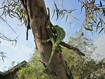 O lagarto verde foto de stock