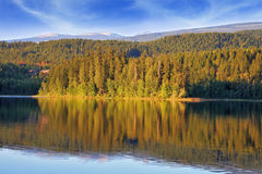 O lago é rico com peixes Foto de Stock