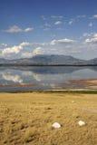 O lago Fotografia de Stock Royalty Free