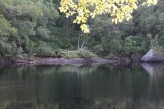 O lago calmo Imagem de Stock