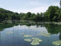 O lago calmo com nuvens e árvores refletiu na água Foto de Stock