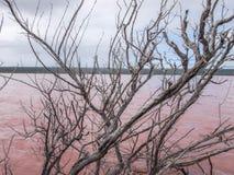O lago cor-de-rosa lagoon de Hutt fotos de stock