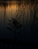 O lago do sol de ajuste ajustou-se fora do mistério da sombra da árvore Fotos de Stock