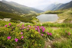 O lago mountain e as flores do rododendro ajardinam na montagem de Rodnei Imagens de Stock
