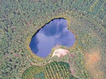 O lago na floresta foto de stock