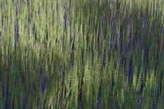 O lago planta a textura Foto de Stock Royalty Free