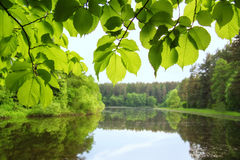 O lago silencioso cercado por árvores fotos de stock