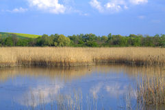 O lago spring reflete o céu azul Foto de Stock Royalty Free