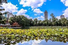 O lago verde Kunming Fotos de Stock