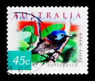 O lamberti Variegated de Fairywren Malurus, natureza de Austrália - abandone o serie dos pássaros, cerca de 2001 Imagem de Stock Royalty Free