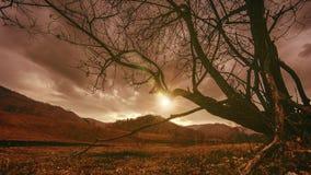 O lapso de tempo da árvore da morte e seca a grama amarela na paisagem mountian com nuvens e raios do sol Movimento horizontal do vídeos de arquivo