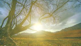 O lapso de tempo da árvore da morte e seca a grama amarela na paisagem mountian com nuvens e raios do sol Movimento horizontal do filme