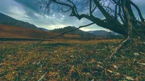 O lapso de tempo da ?rvore da morte e seca a grama amarela na paisagem mountian com nuvens e raios do sol Movimento horizontal do filme