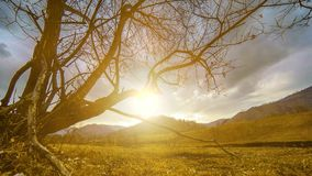 O lapso de tempo da ?rvore da morte e seca a grama amarela na paisagem mountian com nuvens e raios do sol Movimento horizontal do video estoque