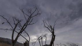 O lapso de tempo da ?rvore da morte e seca a grama amarela na paisagem mountian com nuvens e raios do sol Movimento horizontal do vídeos de arquivo