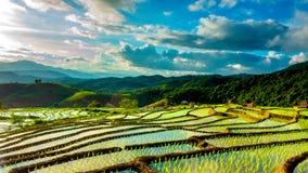 O lapso de tempo, nuvens que movem-se sobre os campos do arroz refletiu na água vídeos de arquivo
