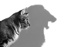 O leão dentro Imagens de Stock Royalty Free