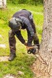 O lenhador corta a árvore de noz velha Trabalho de uma serra de cadeia Preparação de madeira para aquecer-se fotografia de stock royalty free
