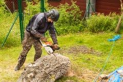 O lenhador corta a serra de cadeia Lenhador profissional Cutting uma árvore grande no jardim fotos de stock