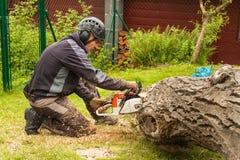 O lenhador corta a serra de cadeia Lenhador profissional Cutting uma árvore grande no jardim imagem de stock