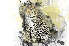 O leopardo, Jaguar, predador pintou cores ilustração royalty free