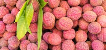 O lichi, ou o lichi, lichi chinensis, lichi fresco frutificam Fotos de Stock