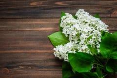 O lilás bonito em um fundo de madeira Fotografia de Stock Royalty Free