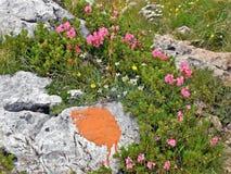 O lilás dos rododendros foto de stock