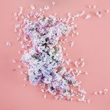 O lilás floresce a opinião superior colocada do fundo plano floral mínimo cor-de-rosa Fotos de Stock