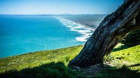 O litoral nacional de Reyes do ponto ajardina o incalifornia imagens de stock royalty free
