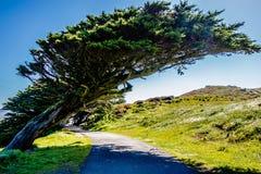 O litoral nacional de Reyes do ponto ajardina o incalifornia fotos de stock