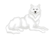 O lobo ártico Fotografia de Stock Royalty Free