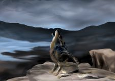 O lobo illusive Fotografia de Stock