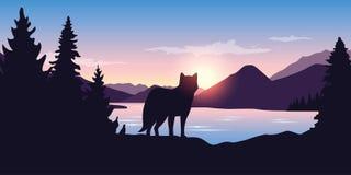 O lobo olha na distância da paisagem da montanha ilustração do vetor