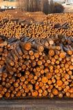 O log termina o moinho medido de madeira da madeira serrada dos troncos de árvore do corte de círculos Fotografia de Stock