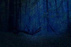 O luar misterioso e fantástico da noite da floresta destaca uma árvore caída imagem de stock