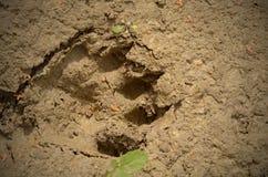 O lutra do Lutra da lontra euro-asiática Fotografia de Stock Royalty Free