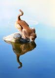 O macaco Foto de Stock Royalty Free