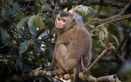 O macaco fotos de stock