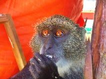 O macaco imagens de stock royalty free