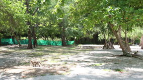 O macaco anda na terra entre árvores no parque vídeos de arquivo