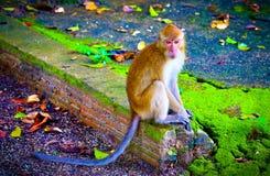 O macaco bonito do beb? imagens de stock