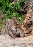 O macaco da mãe e seu bebê no templo Imagens de Stock Royalty Free