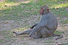O macaco está no parque tailandês Fotografia de Stock