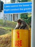 O macaco está usando o escaninho para o alimento imagem de stock