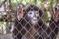 O macaco, independência, desaparecimento, animais selvagens naturais, quer ir em casa, foto de stock royalty free