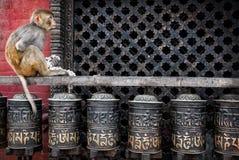 O macaco na oração roda dentro Nepal Imagem de Stock Royalty Free