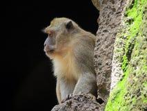 O macaco pensa como assentar bem em um homem fotos de stock royalty free