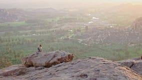 O macaco pequeno senta-se na rocha alta contra o vale do por do sol vídeos de arquivo